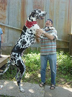 tallest-dog-world