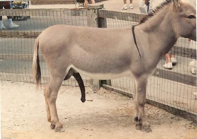 Juez teme dick burro
