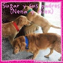 Mis queridos perritos!!!