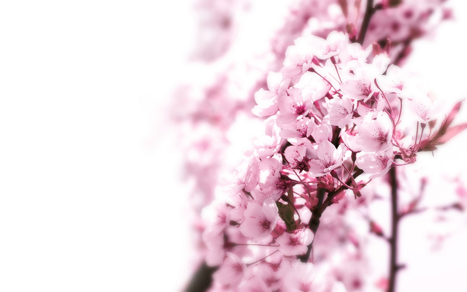 Awesome wallpapers pink cherry blossom for Blumenmuster tapete