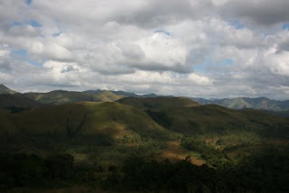 shola vegetation