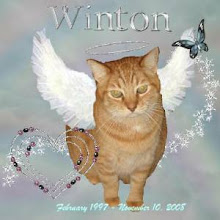 Rest in Peace my Sweet Winton! I love you!