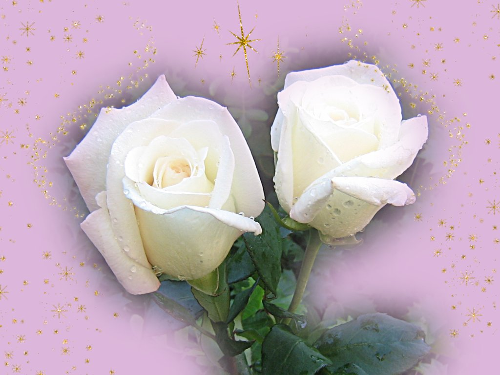 20 imágenes de amor, ositos, flores, regalos, parejas y