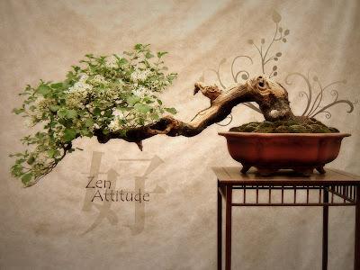 Wallpaper Zen Attitude Pepua Personalizacion y Seguridad