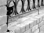 A famosa lenda do osso de gato ...