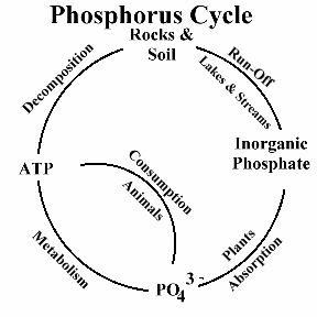 philosophy of science portal  importance of phosphorus