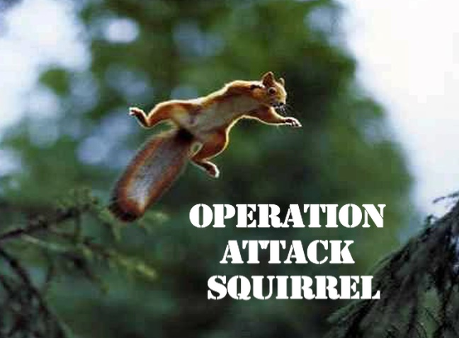 Operation Attack Squirrel