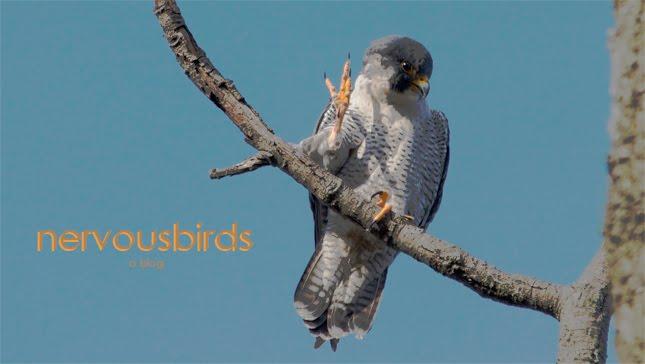 Nervous Birds