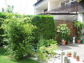 Bambus negru