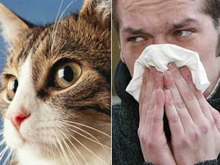 Mascotas y alergia