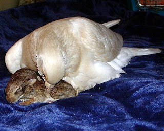 Caring for a one-legged pigeon 3 children Rabbits