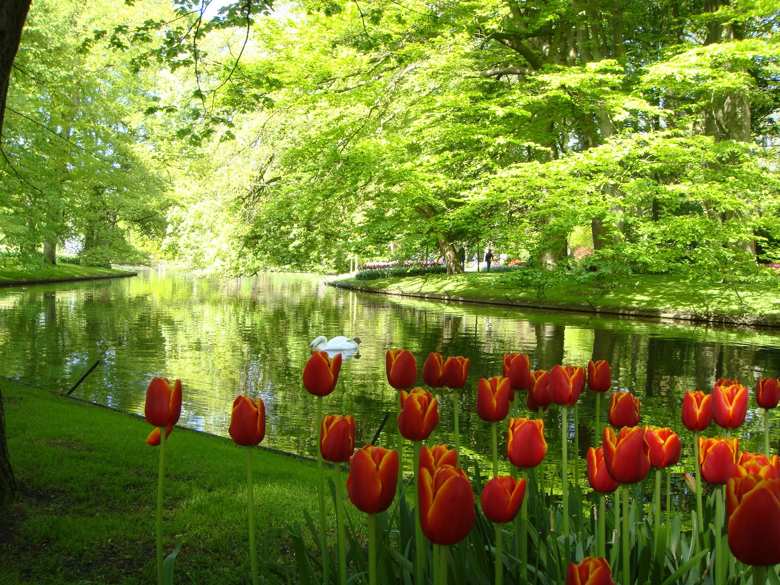 Porkodi Keukenkof Largest Flower Garden In The World