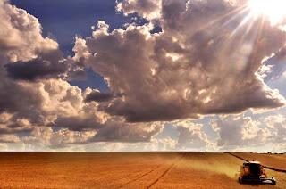 A beleza da colheita do trigo no RS.