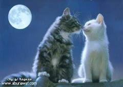 ليلة بكى فيها القمر