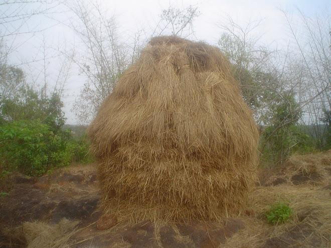 പ്രതാപം നഷ്ടമായ വൈക്കോല് ക്കൂന...