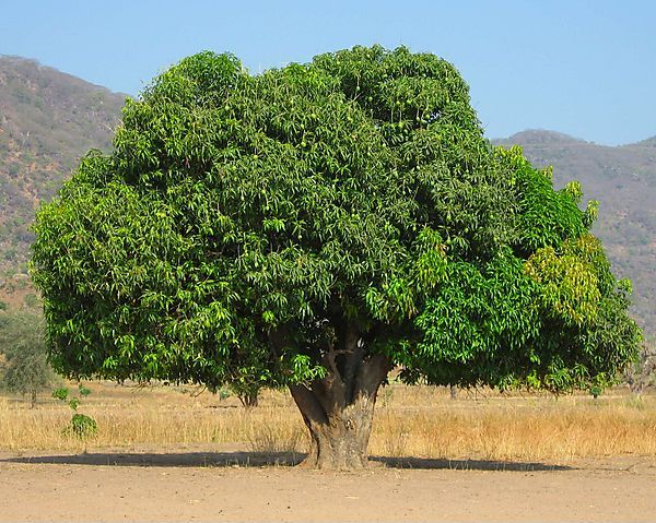 essays on trees in tamil