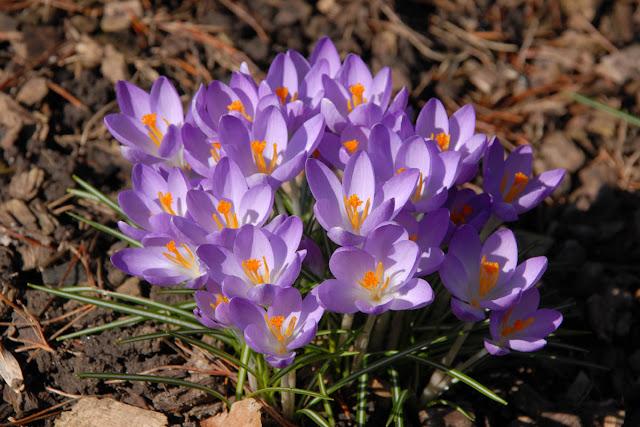 plantas jardim litoral:: Novas Flores no Jardim !!! Venda/Locação de Imóveis no litoral