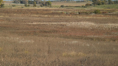 [Western portion of Shoemaker Marsh, saline wetland]