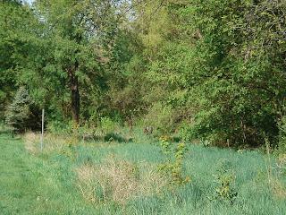 [Reforestation area at Elmwood Park]
