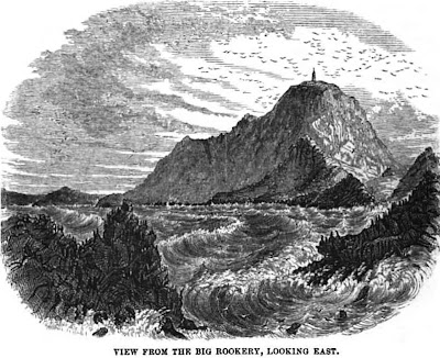 [Rookery at the Farallon Islands, 1856]