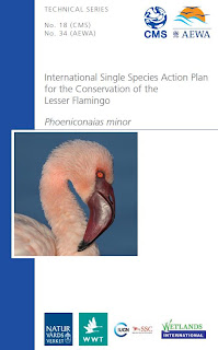 [Cover of conservation plan for Lesser Flamingo]