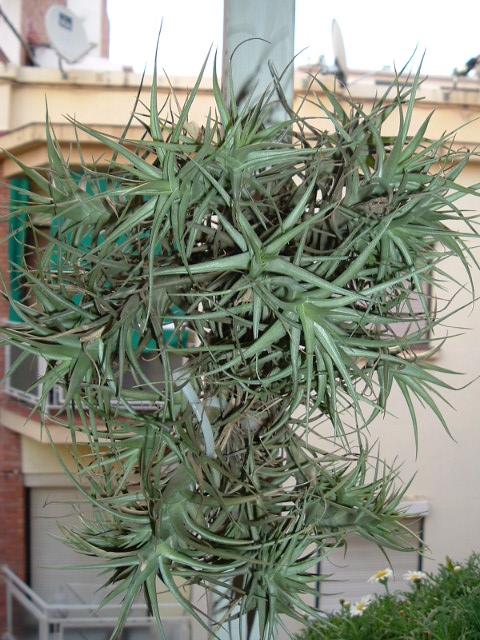 mis plantas trucos y consejos mi planta del aire