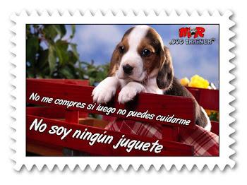 No regales mascotas