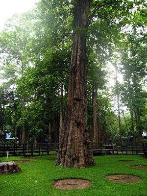 Ton Sak Yai Forest Parks