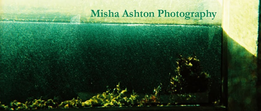 Misha Ashton Photography