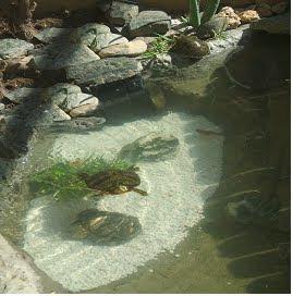 Dise o construccion de estanques eduart for Construccion de estanques acuicolas