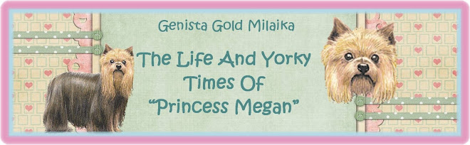 Genista Gold Milaika