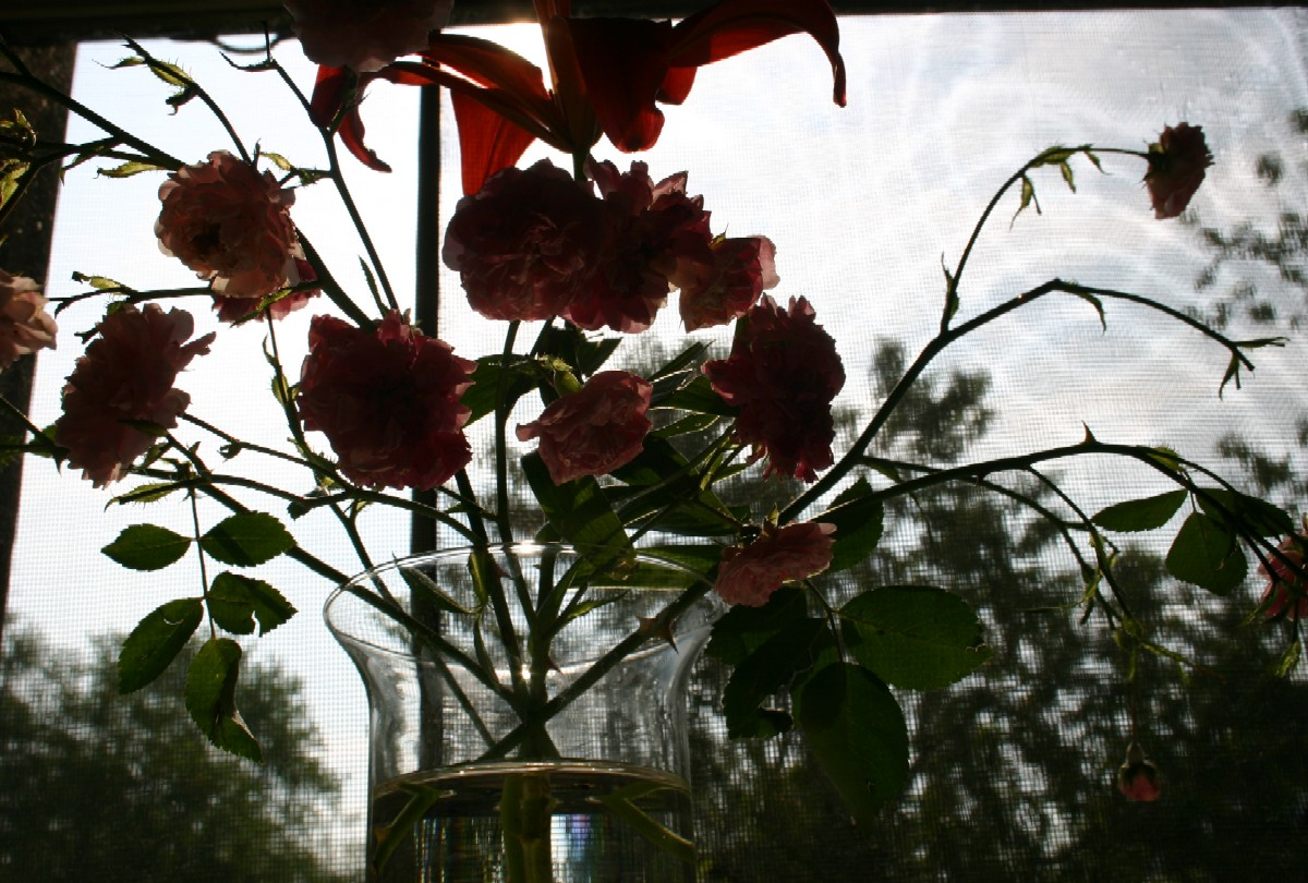 http://4.bp.blogspot.com/_J3pJojTTW1E/TAPO8CBCZyI/AAAAAAAABSo/WHrxdKZnpEA/s1600/lilly_roses_sun.jpg