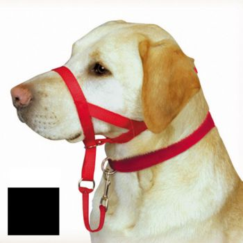Halti20Head%20Collar.jpg