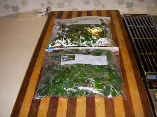 i also did this exact procedure to freeze lambu0027s quarters a very healthy and delicious weed in the spring you can see from these photos that a huge bowl - Can I Freeze Kale