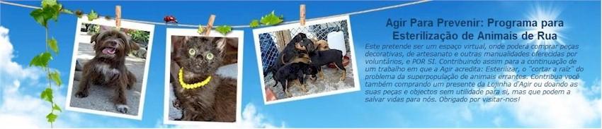 Agir Para Prevenir: Programa para Esterilização de Animais de Rua