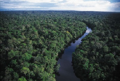 Amazon River+Amazon Rainforest