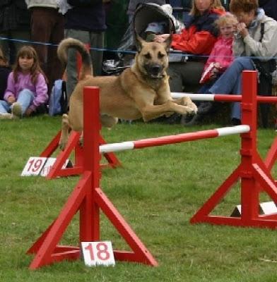 motorcityblog detroit kennel club dog shows cobo hall detroit dog shows 392x400