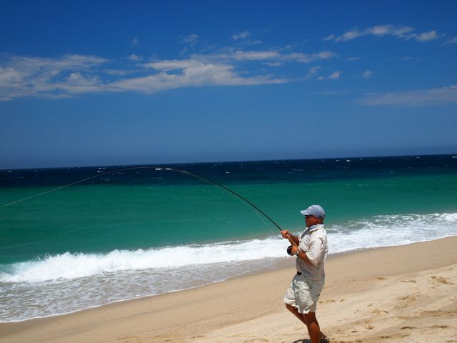 Baja anglers david fox gets his giant roosterfish off the for Rooster fish cabo