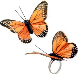 butterfly passion 300.jpg