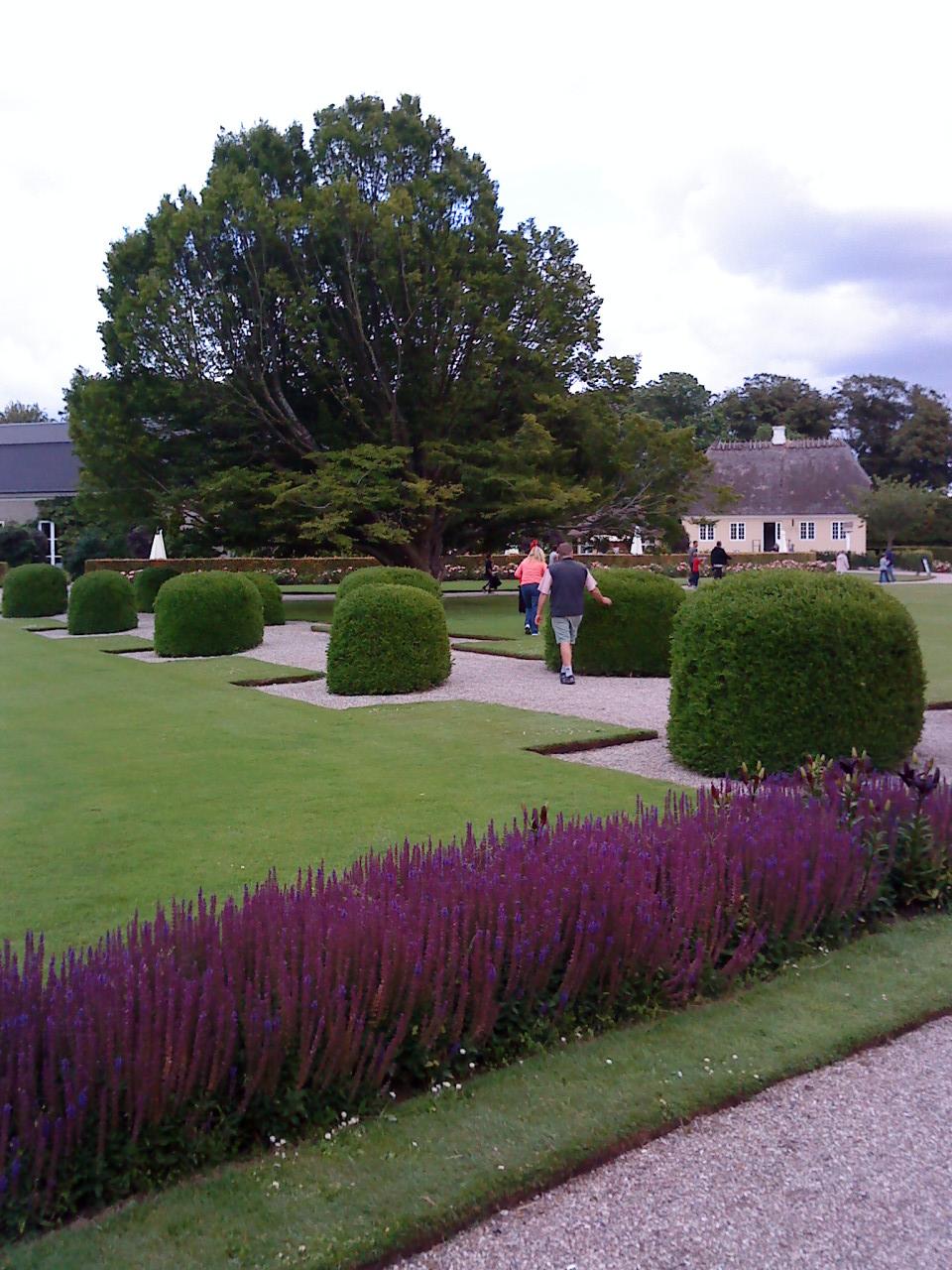 Trädgård på berget: augusti 2010