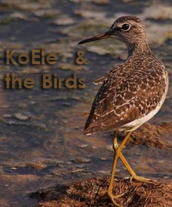 KoEle & the Birds