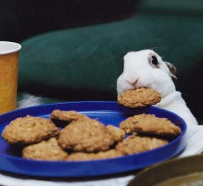http://4.bp.blogspot.com/_J9PlRvGGXS8/SiY3PAnD3RI/AAAAAAAAAy4/8lK-Xqmovgg/s400/funny_rabbit.jpg