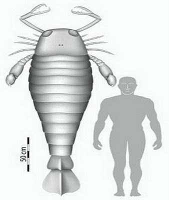 Sea Scorpion - Was Bigger Than a Human  Seen On www.coolpicturegallery.us