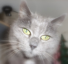 Kajsa (1992 - 2010)