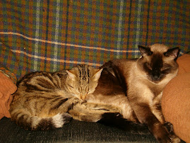 http://onecatshyofcrazy.blogspot.com/