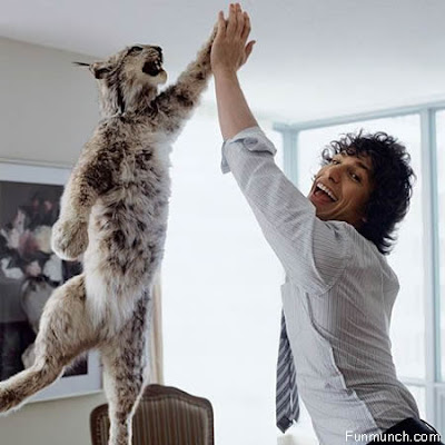 A cat and a man high five