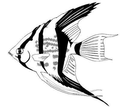 Peixe colorir
