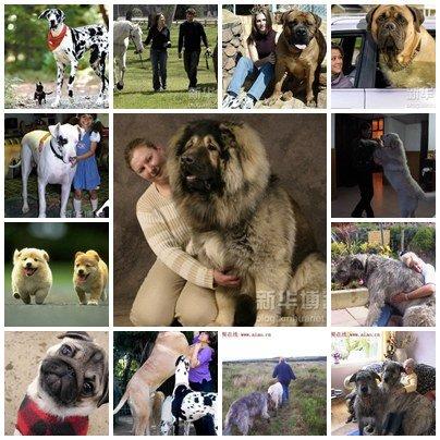 หมาพันธุ์ใหญ่ หมาพันธุ์ใหญ่ หมาพันธุ์ใหญ่