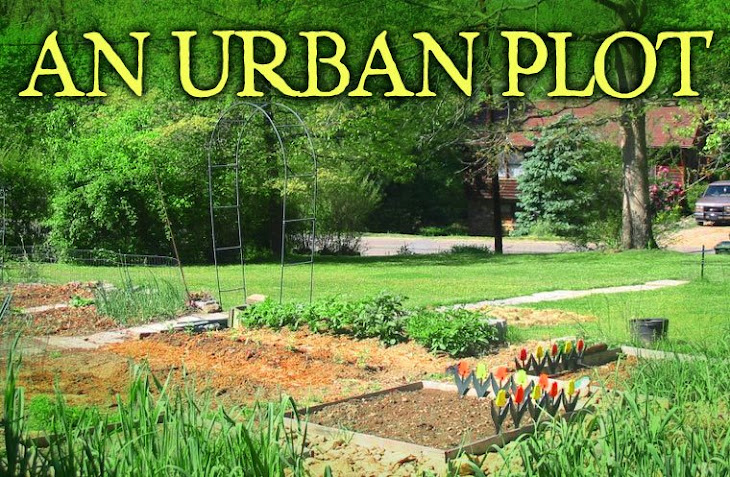 AN URBAN PLOT