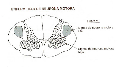 NEUROANATOMIA CHES 2009